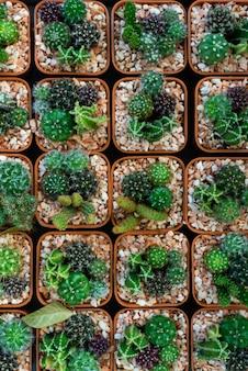 鉢植えのサボテンと多肉植物