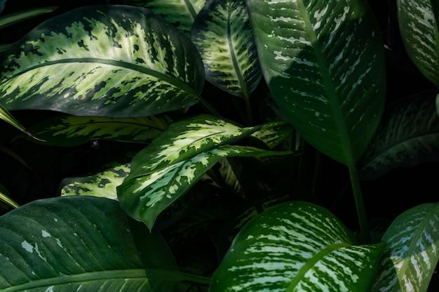 緑の葉のフルフレーム