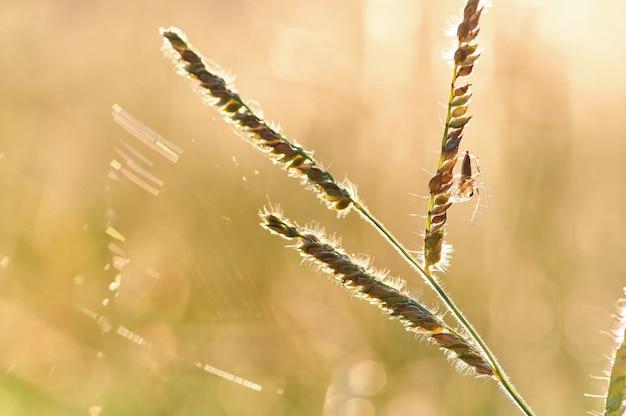 夜の暖かい光の中で草にとまるクモ
