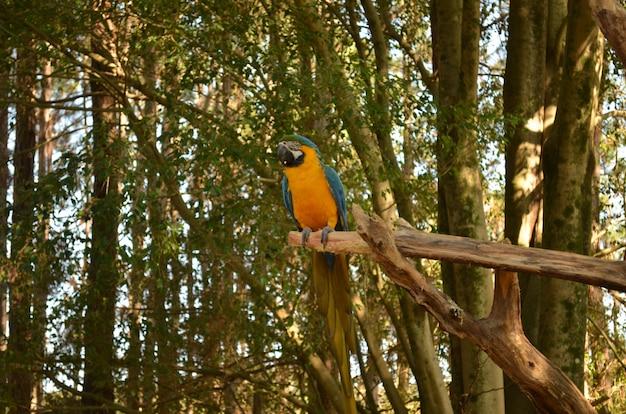 熱帯ブラジルの鳥(アララ)
