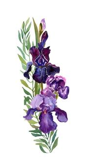 Цветочная композиция радужки при фиолетовые цветки изолированные на белизне.