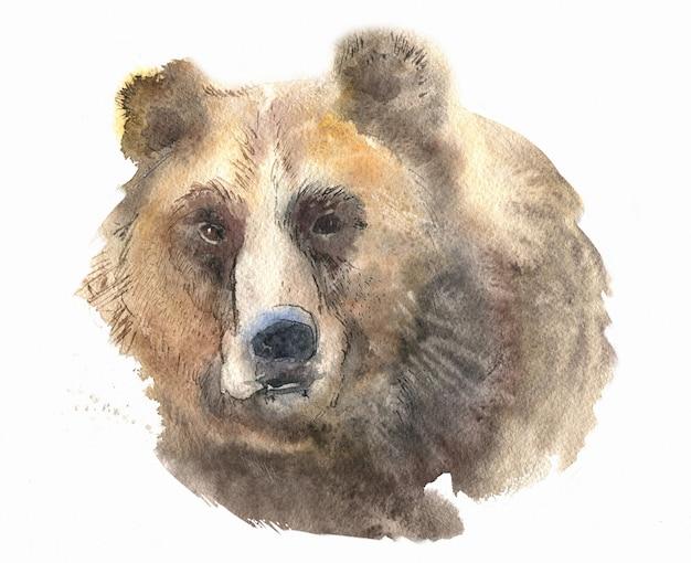 白で隔離されるクマの肖像画の水彩画