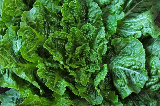 Свежий зеленый салат ромейн. ромэн салатный букет на стильной потертой поверхности. красивый зеленый букет салата на фоне лофт