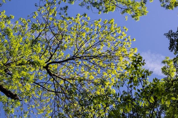 Зеленые деревья на фоне неба