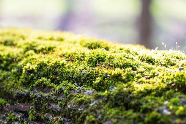 Густой лесной мох растет на дереве летом