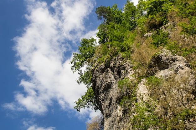 Зеленое дерево сверху на фоне голубого неба и облаков летом