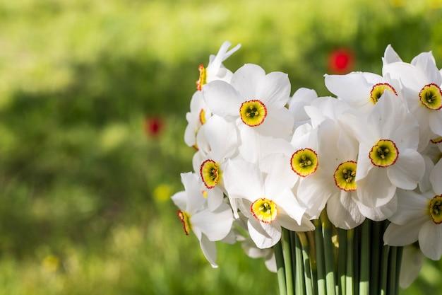 小さな白い水仙の花束