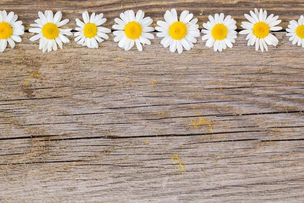 木製の背景にデイジーカモミールの花の境界線