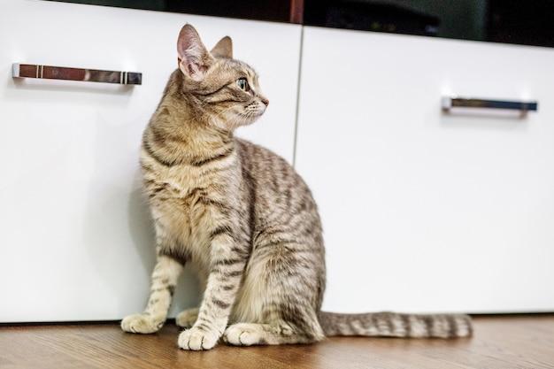 部屋の床に座っている縞模様の猫。