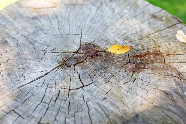 古い木切り株コンセプトの背景色と質感。