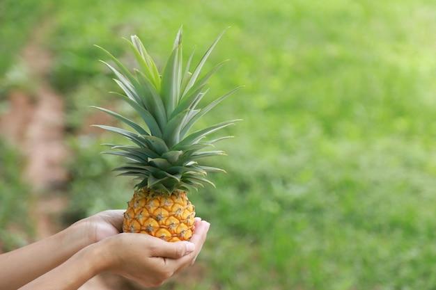Маленький ананас на руках