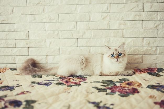 ふわふわの猫がベッドの上に座って