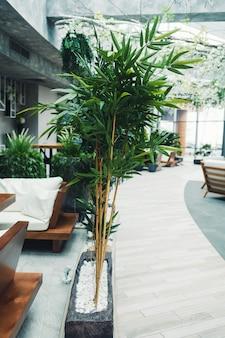 植物とトレンディなカフェ