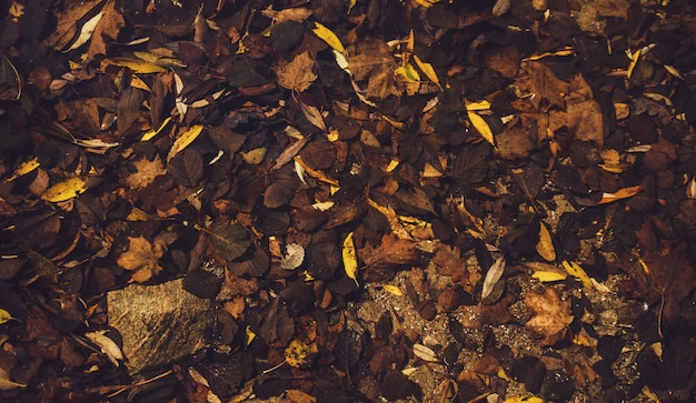 地面にカラフルな葉