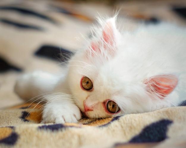 Белый котенок лежал в постели