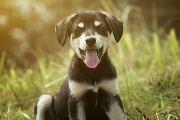 Милый улыбающийся щенок