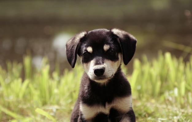 美しい子犬