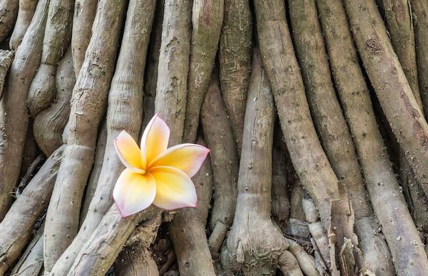 植物テクスチャの茶色の根の上の黄色の落ちた美しい花