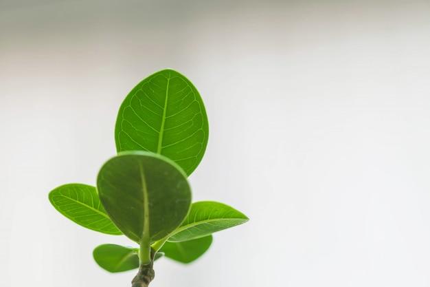 ぼやけたガラス窓のオフィスで飾るためのクローズアップの小さな緑の植物