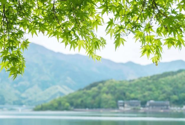 Крупным планом красивые зеленые листья с размытым фоном горы и вид на озеро