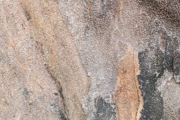 木のテクスチャ背景の幹のひびの入った肌