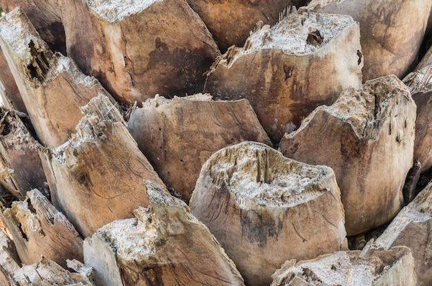 Крупным планом ствол пальмы фоне