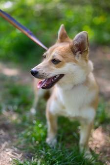 動物の避難所で犬をホームレス