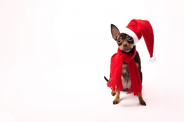 サンタの帽子とプレゼントに孤立した白い背景を持つ犬。