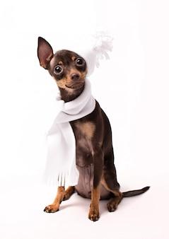 白い帽子とスカーフの犬が座っています。