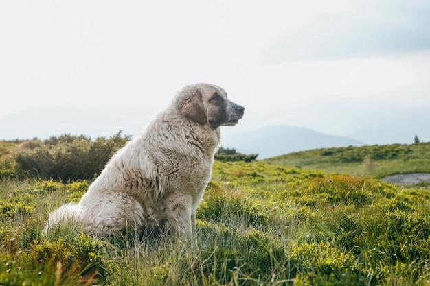 夏の緑の丘の上に座っている犬