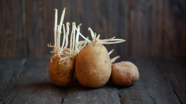 Пусканная ростии уродская органическая картошка на деревянной предпосылке.