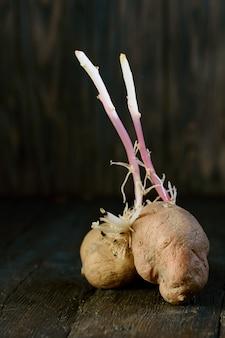Проросшая уродливая органическая картошка на дереве