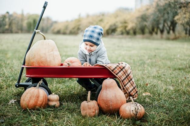 ハロウィーンや感謝祭のためのカボチャがたくさんある寒い秋の日にカボチャパッチに幸せな小さな幼児男の子