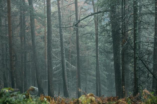 暗い雨の森で凍りつくような朝