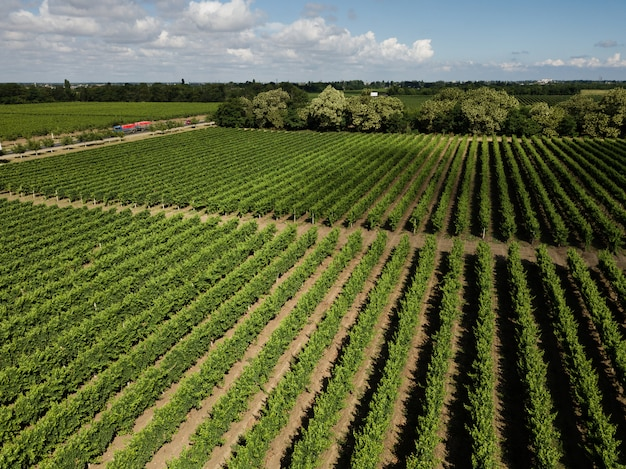 無人機からブドウ畑への空中平面図