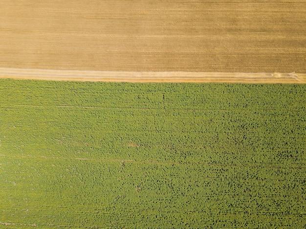 無人機からひまわりと小麦畑に空中のトップビュー