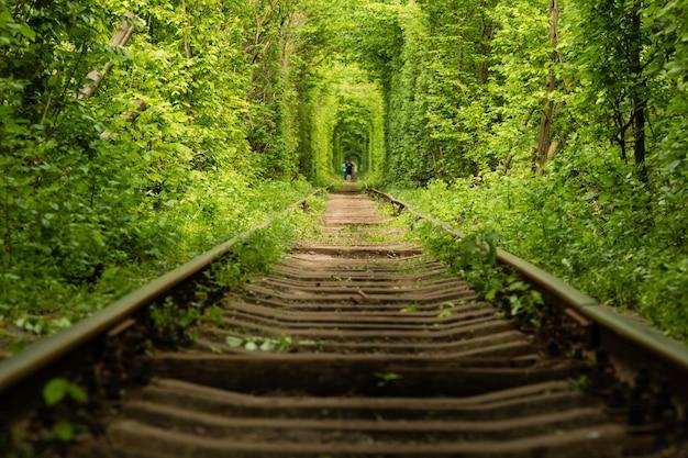 鉄道、ウクライナ、クレヴァンに沿って木から作成された実際の自然の不思議愛トンネル