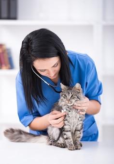 医者はかわいい美しい猫の検査をしています。