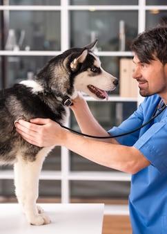 医者が彼女を診察している間、犬はじっと立っています。