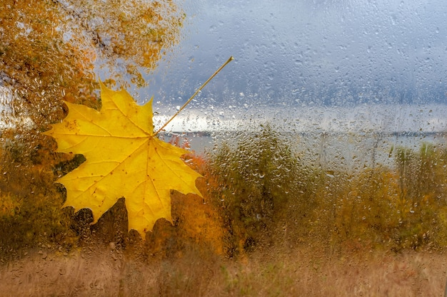 Кленовый лист на мокром стекле с каплями после дождя