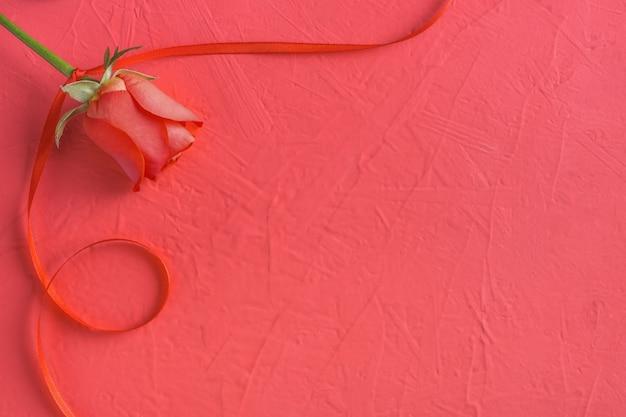 Праздничная композиция из красной розы и ленты на розовом на день святого валентина
