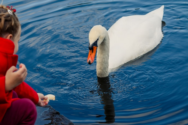 湖での白鳥の餌の子供