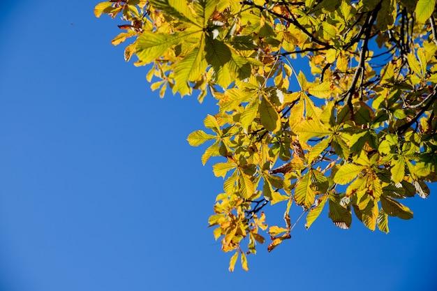 Осенние листья в естественной среде на голубом небе