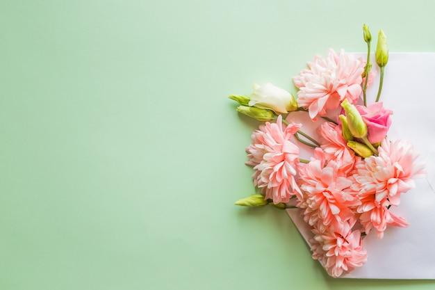 Раскрытый конверт, полный цветущих розовых хризантем, цветы на мягкой зеленой стене