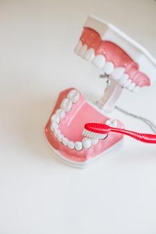 歯ブラシと顎。完全な衛生管理と白い健康的な笑顔を保ちます。歯科のヒント。保持するブラシ