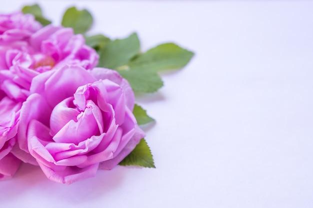 ピンクのバラの創造的な配置