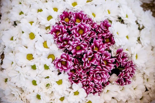 Цветочный букет хризантем, красно-белые хризантемы, похожие на крошечные ромашки с цветочным рисунком.