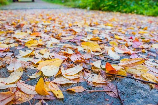 Красочные осенние листья на обочине дороги осенью