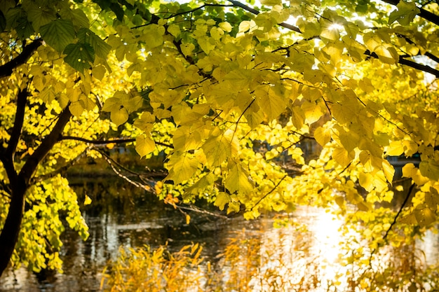 秋の森と秋の湖。