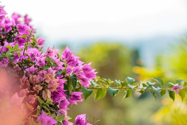 青い空に熱帯の花の木